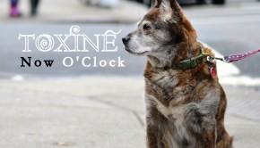 toxine now o clock 2015
